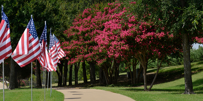 Crape Myrtle Trees and Flags